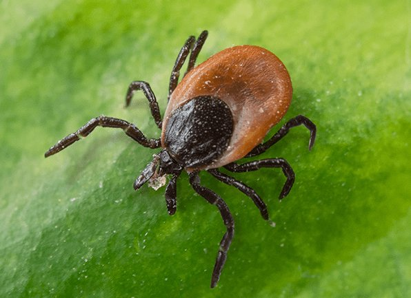 tick control services in Statesville